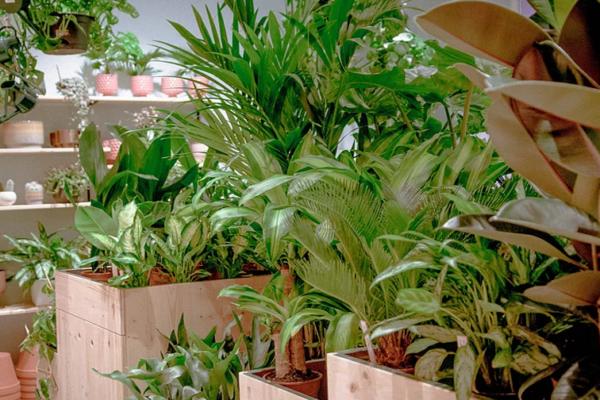 Bild 1 von Green Note Zimmerpflanzen